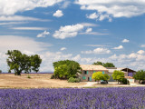 Farmhouse in a Lavender Field, Provence, France Photographic Print by Nadia Isakova