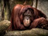 Entspannen Fotografie-Druck von Stephen Arens