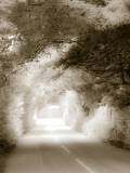 Road in Autumn Photographic Print by David Ridley