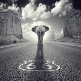 Get Your Tricks Stampa fotografica di Luis Beltran