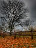 Topcat Lámina fotográfica por Jim Crotty