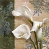 Lily Fair Posters por Igor Levashov