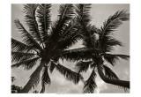 Palms at Night V Posters av Tang Ling