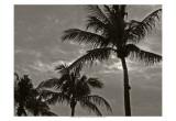 Palms at Night IV Plakater av Tang Ling