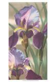 Asian Iris I Prints by Jason Higby