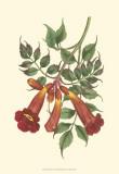Vibrant Blooms II Poster von Sydenham Teast Edwards
