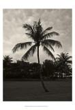 Palms at Night II Poster von Tang Ling