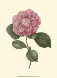 Camellia Blooms III Art by J.J. Jung