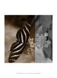 Butterfly Study IV Art