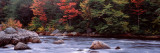 Trees Along a River, Moose River, Adirondack Mountains, New York State, USA Photographic Print