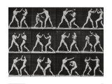 Phases in a Boxing Match Giclee Print by Eadweard Muybridge