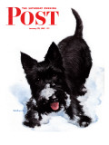 """""""Scotty in Snow,"""" Saturday Evening Post Cover, January 30, 1943 Giclee Print by W.W. Calvert"""