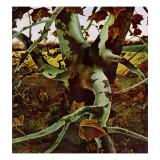 """Sycamore Tree and Hunter,"" October 16, 1943 ジクレープリント : アンドリュー・ワイエス"
