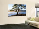 Tree on Playa Catritre, Lago Lacar, San Martin De Los Andes Wall Mural by Grant Dixon