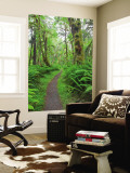 Maple Glade Trail, Quinault Rain Forest, Olympic National Park, Washington, USA Wall Mural by Jamie & Judy Wild