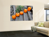 Pumpkins on Steps (Typical Autumn Harvest or Halloween Display) Wall Mural by David Ryan