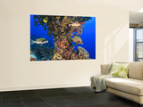 Harlequin Sweetlips, Butterflyfish and Glasseye, Palau, Micronesia Poster géant par Stuart Westmorland