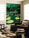 Lake in Gardens Wall Mural by Olivier Cirendini