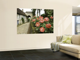 Roses and Archway on Rue Du Chateau in Gerberoy Wall Mural by Barbara Van Zanten