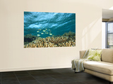 Damselfish, Tukang Besi/Wakatobi Archipelago Marine Preserve, South Sulawesi, Indonesia Wall Mural by Stuart Westmorland