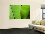 Leaf Fronds Wall Mural by Christer Fredriksson