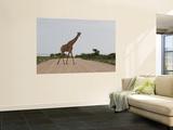 Giraffe Crossing the Road Wall Mural by Uros Ravbar
