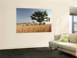 Wheat Field with Uchisar Village in Background Wall Mural by Tim Hughes