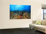 Schooling Anthias Fish, Wetar Island, Banda Sea, Indonesia Wall Mural by Stuart Westmorland