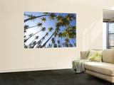 Coconut Palm Trees Wall Mural by John Elk III