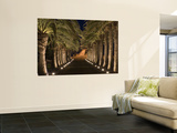 Palm-Lined Path and Pier at Night Wall Mural by Holger Leue
