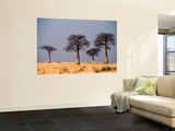 Baobab Trees on Horizon, Singida Wall Mural by Mark Daffey