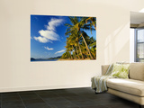 Palm Trees on Palm Cove Beach Wall Mural by Richard l'Anson