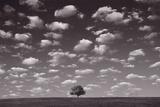 Lone Tree Morning In BW Reproduction photographique par Steve Gadomski