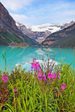 Fireweed at Lakeside, Lake Louise, Canada Reproduction photographique par George Oze