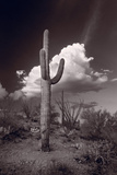 Saguaro Sunset Arizona BW Fotografie-Druck von Steve Gadomski