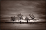 Quatre arbres Reproduction photographique par Steve Gadomski
