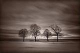 Four Trees Fotoprint van Steve Gadomski