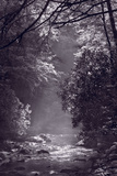 Stream Light BW Photographic Print by Steve Gadomski