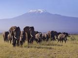 Kilimanjaro Elephants Reproduction photographique par Charles Bowman