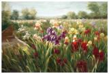 Fields of Iris Posters par Ian Cook