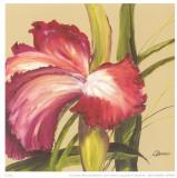 Pink Flower Prints by L. Romero