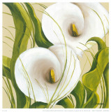 White Flower Poster by L. Romero