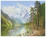 Swan Family In Springtime Plakater af Helmut Glassl