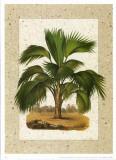 Palmeras V Prints by William Rhind