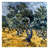 Oliveraie Poster by Vincent van Gogh