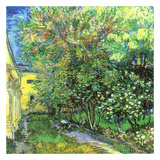 Jardin de l'hospice Saint-Paul Plakat af Vincent van Gogh