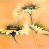 Apricot Summer I Prints by Elena Filatov