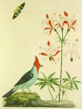 Dominical Cardinal Tin Sign by John Frederick Miller