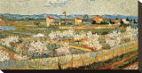 Peach Blossoms in the Crau, c.1889 Reproducción de lámina sobre lienzo por Vincent van Gogh