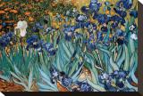 Iris, Saint-Rémy, vers 1889 Tableau sur toile par Vincent Van Gogh